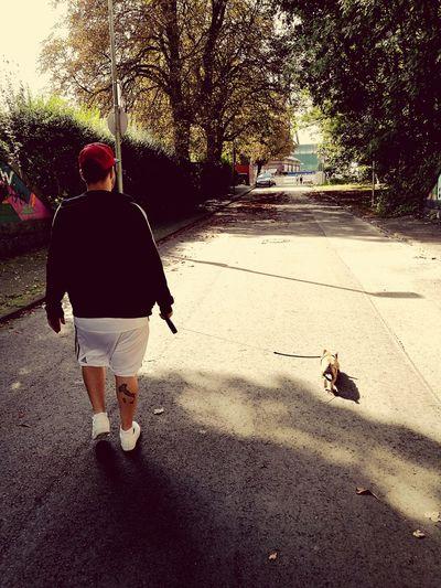 Walking The Dog Italia Frenchieoftheday Frenchiefreak Frenchiebulldog Frenchbaby Frenchielovers Boyfriend ♡ Walking On Sunshine