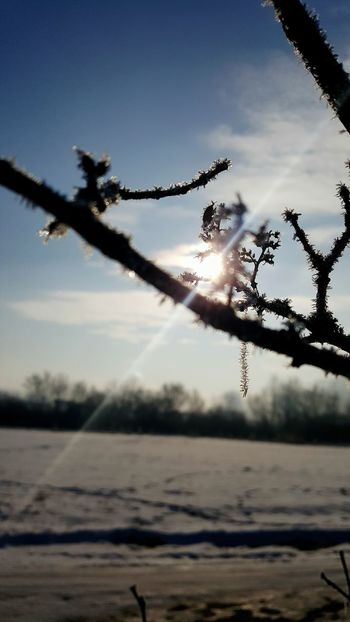 Tree Nature Sunlight Outdoors Sky Winter Beauty In Nature No People Day Cold Temperature Samsungphotography Grofovija Snow❄⛄ Cold And Frosty Nature Beauty Snow ❄ Clouds & Sky Blue Sky Sky And Clouds Snow