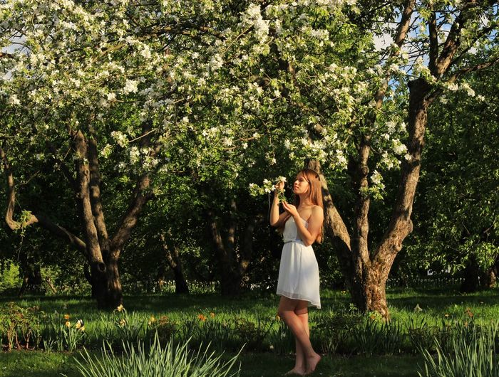 Park Beautiful Nature Beautiful Woman Girl Blossoming Time Blossoming Tree Blossoming  Blossom Tree Appletree Tree Young Women Green Color Sunlight Outdoors Nature Lifestyles Day Grass Young Adult
