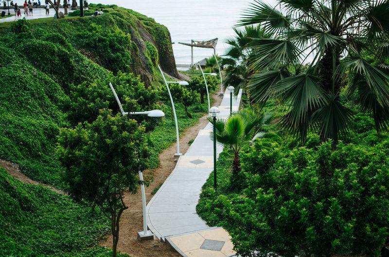 Narrow footpath along plants and trees