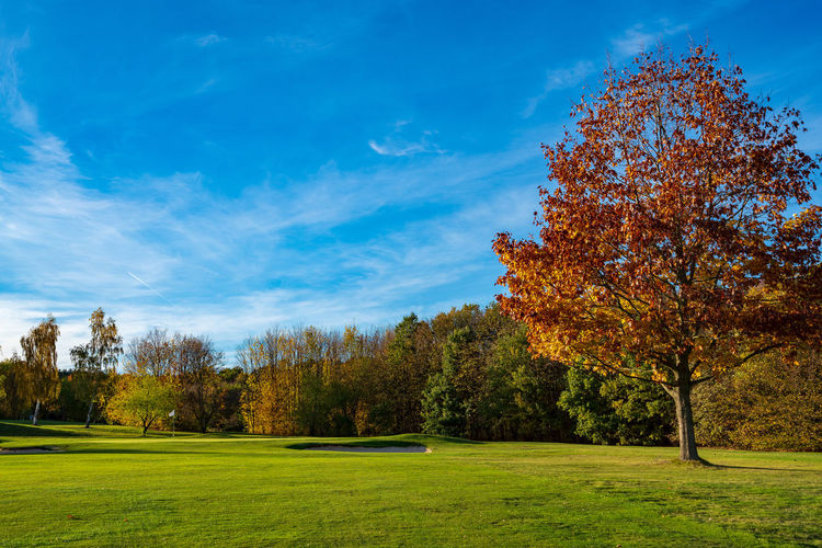 17th Green of Golfclub Dresden Elbflorenz | Tree Sky Grass Green Color Beauty In Nature Cloud - Sky Scenics - Nature Golf Golf Course Golfing Autumn No People Outdoors Landscape Nature Day Plant Tranquil Scene Growth Land Field Environment Tranquility Change