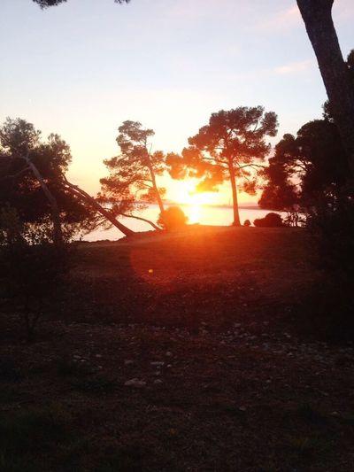 Sunset Trees Sea View Alcanadas Mallorca Setting Sun Coloured Sky