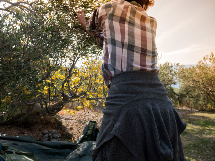 Midsection of woman picking olives from tree at farm
