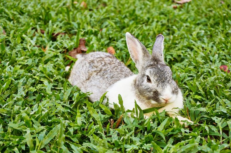 Grass Animal Themes Animals In The Wild One Animal Green Color High Angle View Nature Animal Wildlife Day Plant Growth Field No People Close-up Outdoors Beauty In Nature Mammal Rabbit Cute Lovely