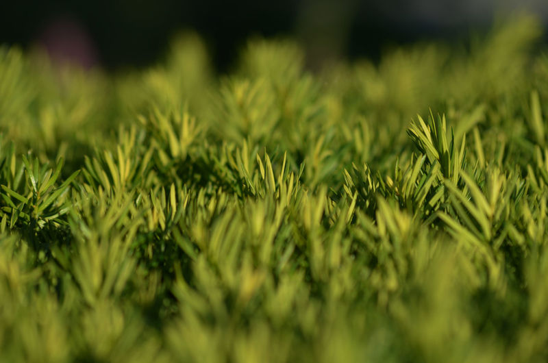 close up bushes Jodie Sims Photography Photographer Photographerinoz Shrub Close-up Grass Green Color Growing Blade Of Grass Plant Life Young Plant Tilt-shift