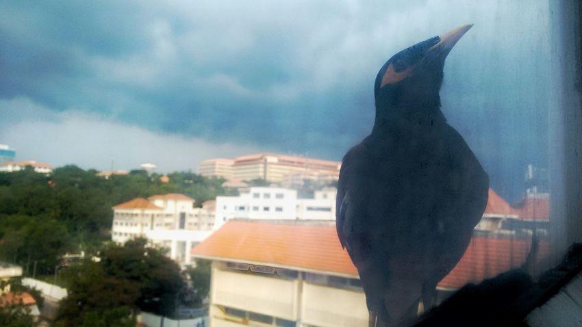through glass window. Bird Sky Nature Phone Photography Technopark