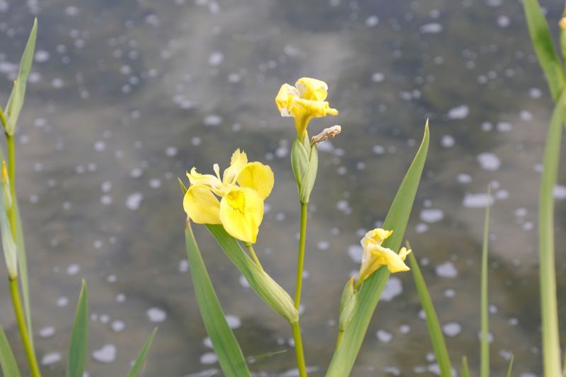 Close-up of yellow flowering plant with water drops