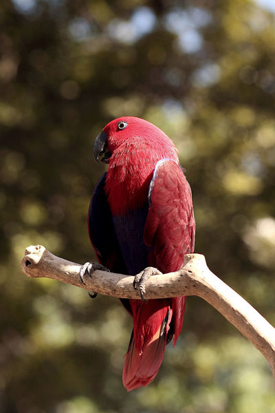 Red is better - scarce natural resources if we do not start acting real Image Animals Bird Photography Stockphotography Eyemphotography Photo Stockphoto Animals In The Wild Zoo Animal Wildlife Nature Photographer Photography Bird Streetphotography EyeEm Fotografi Fotografia ASIA Bali, Indonesia