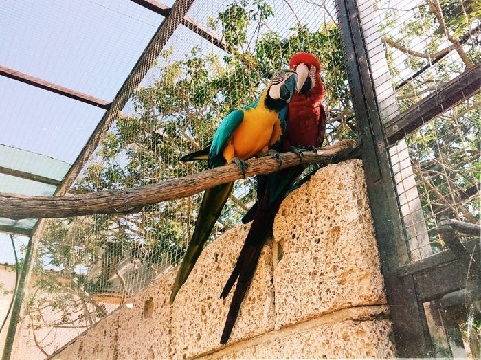 Pet Portraits Parrot Bird Animal Themes Animals In The Wild Tree No People Nature Beauty In Nature