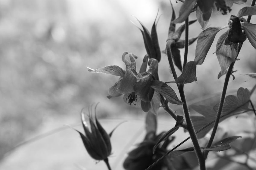 B&w Photography B&w EyeEm Selects Flower Head Flower Uncultivated Tree Leaf Close-up Sky Plant Landscape Flowering Plant Lilac In Bloom Plant Life Botany Cosmos Flower Dahlia Stamen Blossom Botanical Garden