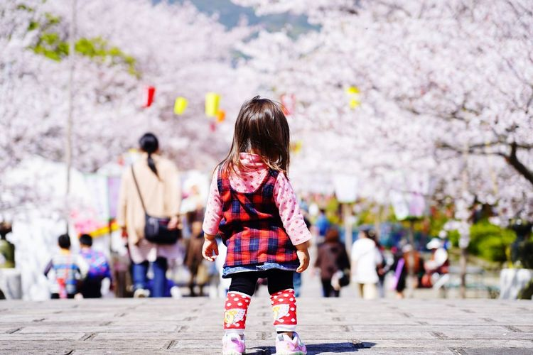 Rear view of woman with cherry blossom