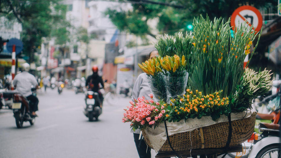 Flower street vendor, one of the most beautiful things of Ha Noi in autumn Bicycle City Day Flower Flower Head Flower Market Focus On Foreground Freshness Land Vehicle Mode Of Transport Nature No People Outdoors Road Street Transportation