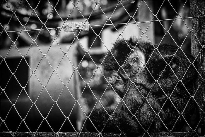 Blackandwithe Monochrome Emotions Bw_collection Blackandwhite Zoo