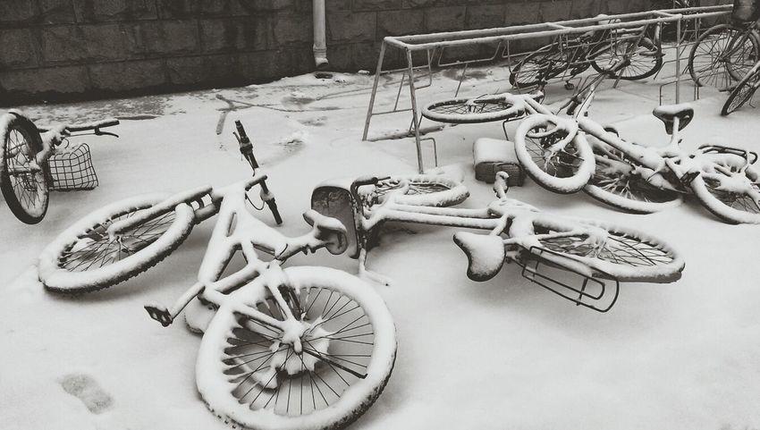 初雪 ¯︶¯ Snow