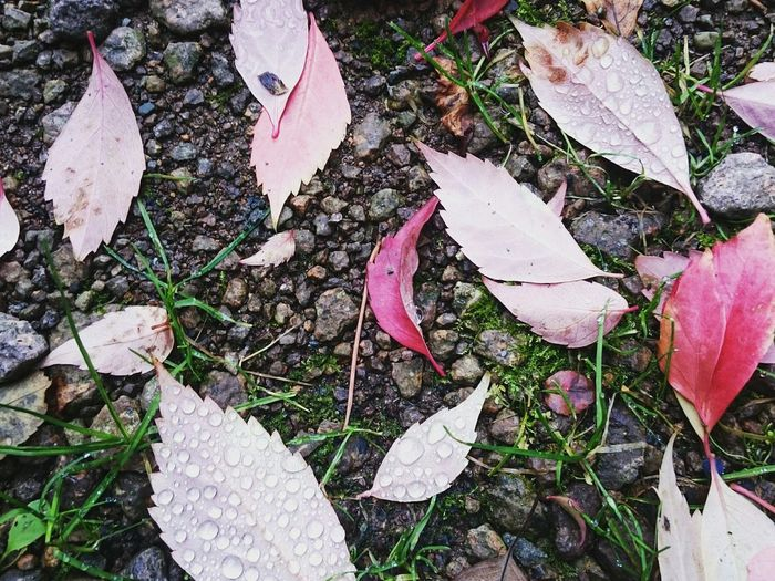 Close-up of leaves on ground