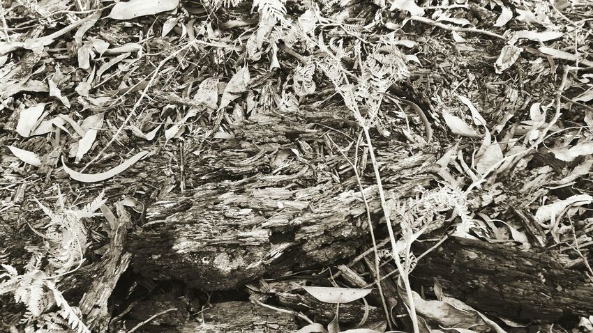 blackandwhitephotography forestry growth forest charred remnants leafy scene leafy forest floor exploring bushland scrub bushfireremnant Nature No People Backgrounds Full Frame Outdoors Beauty In Nature Day Close-up Mobilephone Photography Fragility Relaxation Australianphotographer Through My Lens Through My Lens Australian Beauty In Nature Leisure Activity Lifestyles Textured  Treetrunk Patternsandtexture Textured  Tranquility Growth Branch Tree