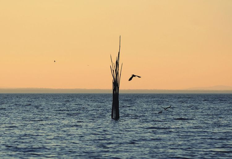 scenic view of italian lake with some birds flying around wooden poles, during sunset Poles Italian Wood Silence Scenic Orange Sky Flying Sunset Lake Bird Water Flying Sea Sunset Sea Life Fishing Silhouette