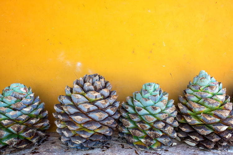 Close-Up Of Blue Agave Pineapples Against Yellow Wall