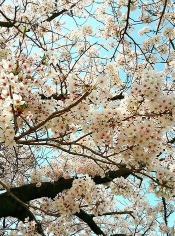 Beautiful Cherry blossom 2015 in Tokyo Holiday And Relaxing Cherryblossom Nice Picture 😉👌 Sakura2015