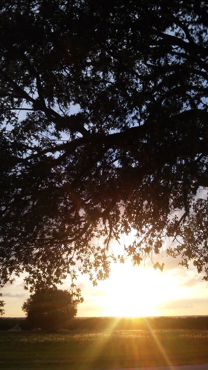 tree, sun, sunbeam, nature, sunlight, sunset, lens flare, silhouette, growth, bright, scenics, tranquility, tranquil scene, beauty in nature, outdoors, sky, no people, landscape, branch, day