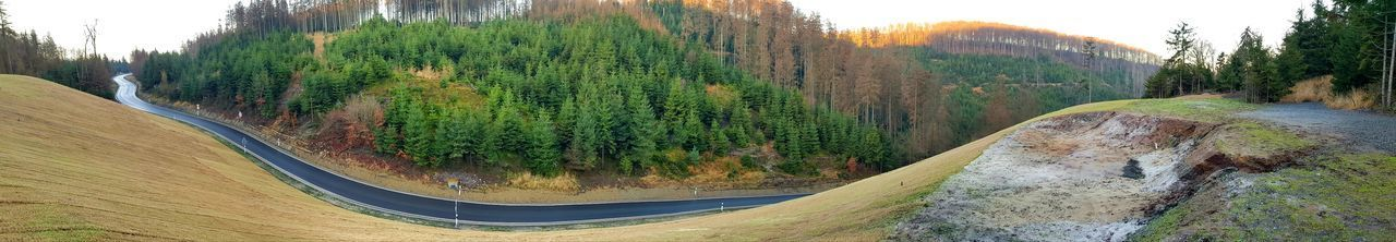 Panoramic view of road amidst trees in forest