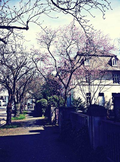 Springtime <3