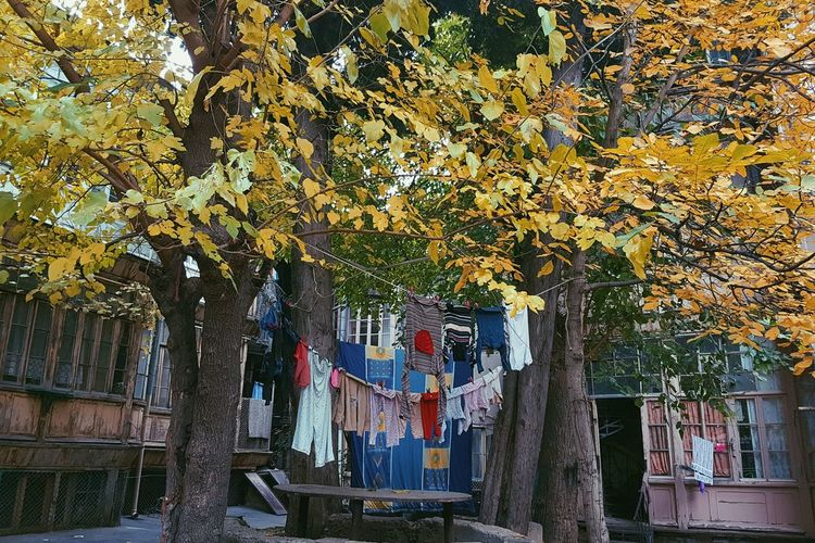Colours of Autumn Tree Hanging Day No People Outdoors Multi Colored Architecture Street Photography Streetphotography Yardhouse Tbilisi Georgia Tbilisi Autumn Colors Autumn Leaves Autumn EyeEmNewHere