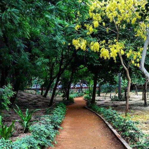 Walk in the park. Indiansummer Flower Nature Amaltas