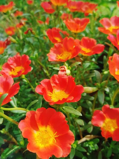 Fresh orangely Flower Plant Growth Beauty In Nature Nature Petal Flower Head Outdoors Fragility Day No People Freshness Leaf Close-up Botanical Garden