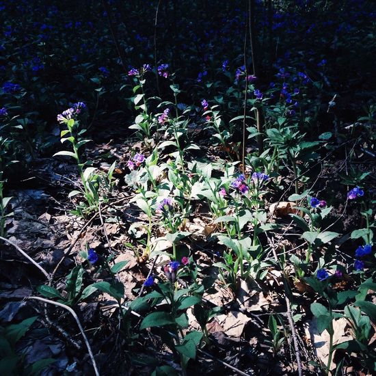 Flowers Nature Light Shadows & Light
