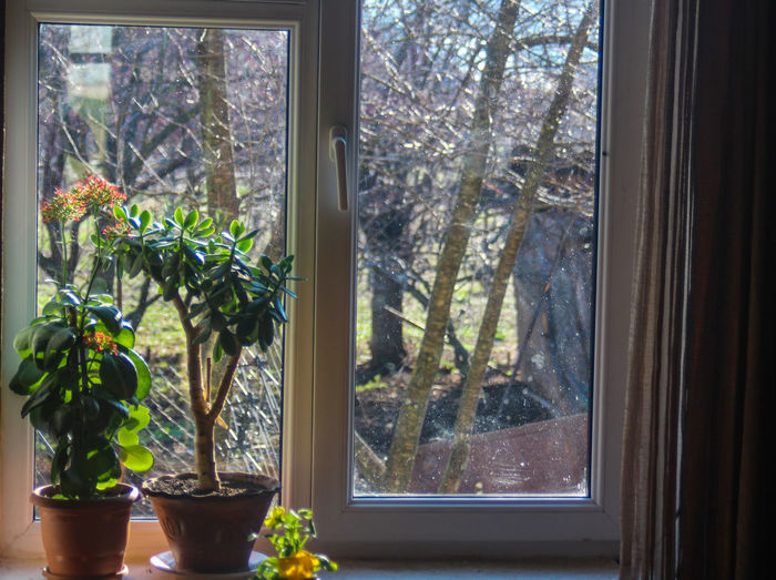 Beauty In Nature Close-up Day Freshness Growth Indoors  Nature No People Plant Tree Window Window Sill