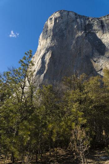 Tree Plant Rock