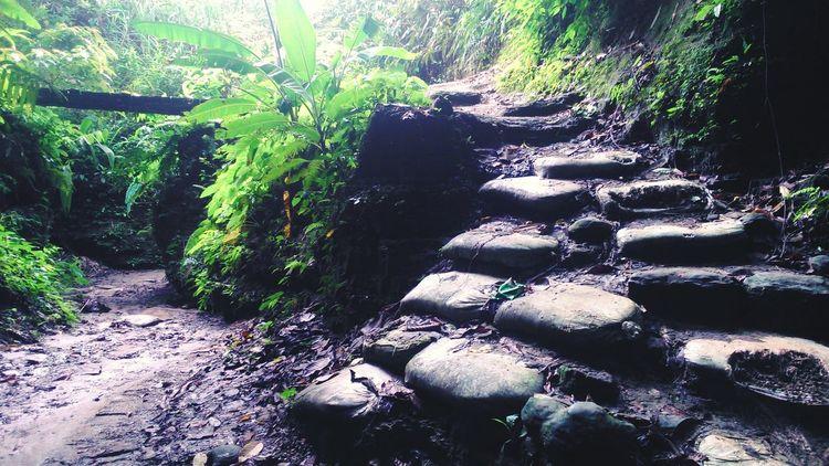 Stairways Nature Green Lifeinbangladesh Cox's Bazar