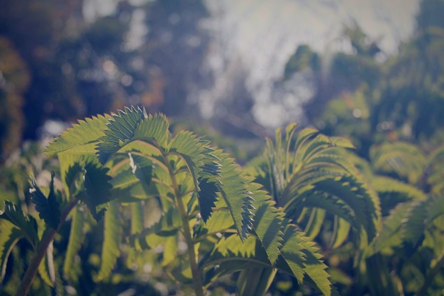 Sunlight Nature Growth Leaf Plant Beauty In Nature Day No People Close-up Fern Outdoors