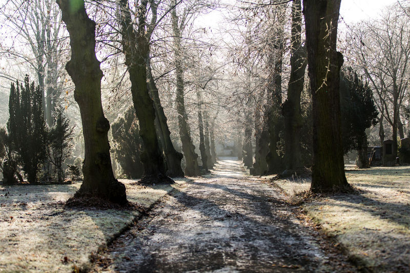 Wintermorning at a cemetery. Cemetery Day Friedhof Frost Frosty Mornings Gegenlicht Kalt Natur Nature Nature Nature Photography Naturerlebnis Naturwunder No People Outdoors Raureif  Rime Winter