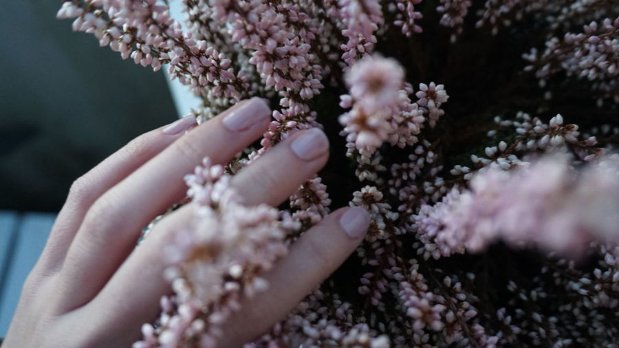 Adult Beauty In Nature Close-up Day Flower Fragility Freshness Human Body Part Human Hand Nature One Person Outdoors People Pink Color