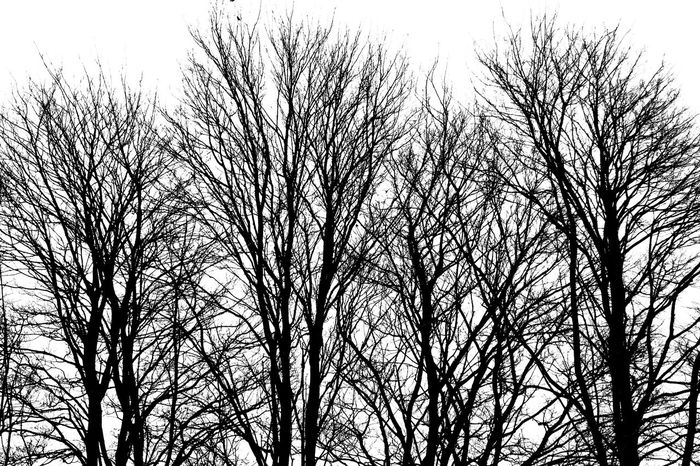Tree Bare Tree Plant Low Angle View Sky No People Branch Nature Tranquility Silhouette Clear Sky Day Outdoors Beauty In Nature Tree Trunk Trunk Scenics - Nature Growth Non-urban Scene Trees And Sky Trees In Winter Trees Lewes Black And White Photography