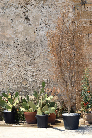Sicilian cityscape with cactus and textured wall Absence Botany Cactus Cityscapes Close-up No People Outdoors Potted Plant Sicily SICILY 2016 - Series Sicilyphotography Textured  Textures And Surfaces Wall Wallpaper