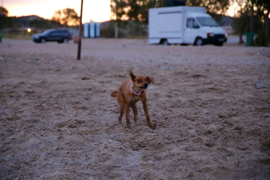 Spinning dog Cute Dog  Dog Dog On Sand Dog On The Beach Domestic Animals Outdoors Pets Pincel