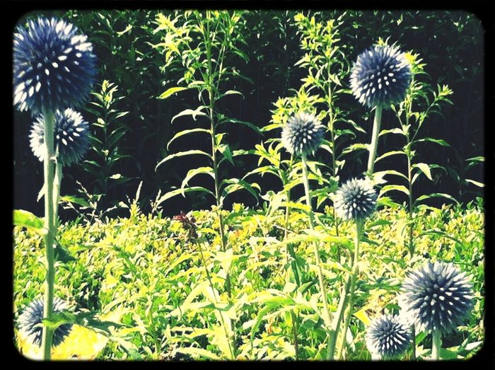 EyeEm Nature Lover Flowerpop Flowerporn