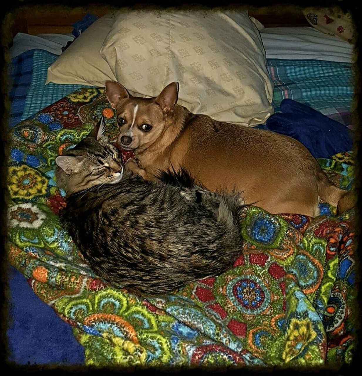 domestic animals, pets, animal themes, mammal, domestic cat, one animal, multi colored, relaxation, sitting, no people, indoors, day