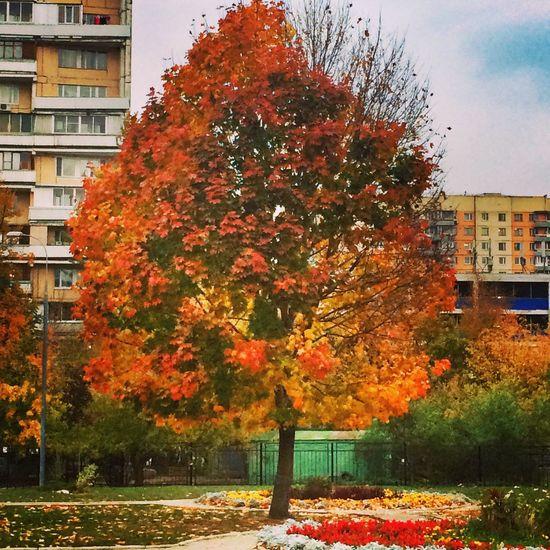 Золотая осень осень Autumn Осень 🍁🍂