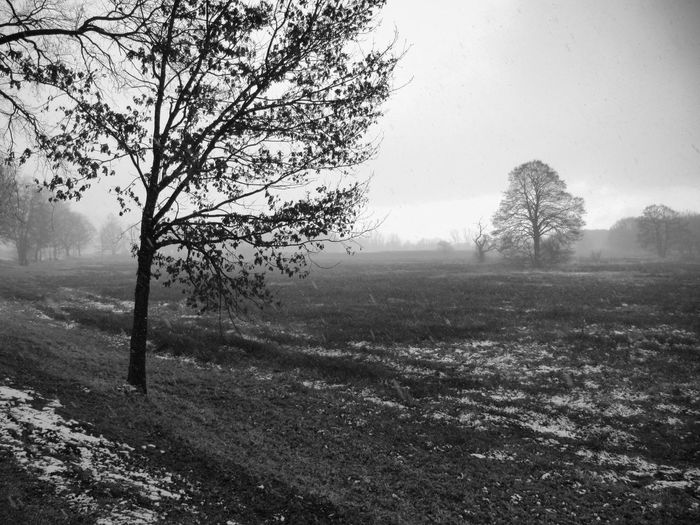Nature Tree Landscape Fog Beauty In Nature No People Winter Outdoors Tranquility Rural Scene Scenics Day Cold Temperature Sky Freshness Bkackandwhite Black And White