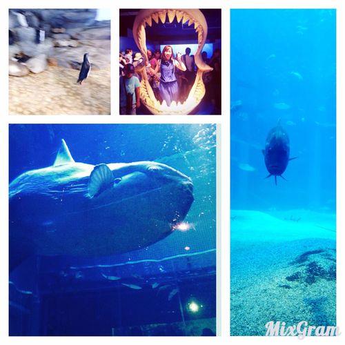 夏の思い出 海遊館 海の生き物