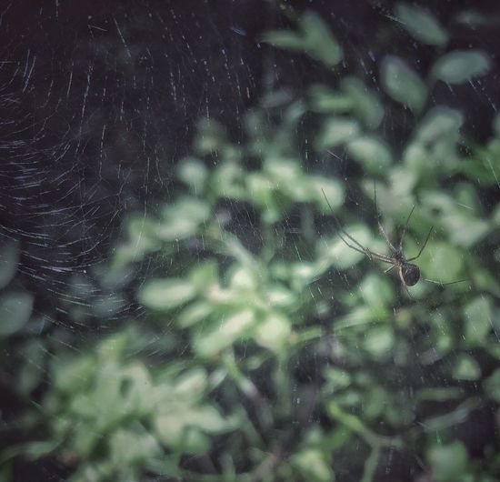 Itsy bitsy spider ... In the forest Spider Spiderweb Spiderworld Spider Nature_collection Eyenaturelover Norway IPhoneography Iphone6plus Beauty In Nature Forestwalk Vestby