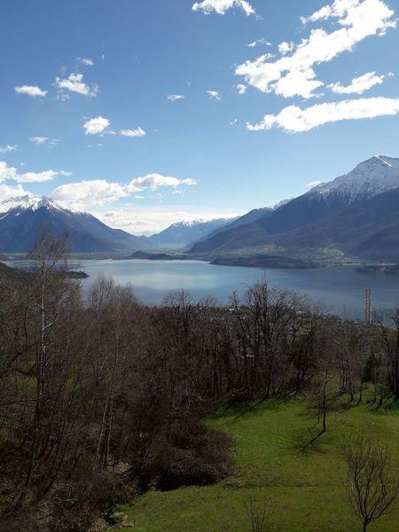 lago di como Tree Springtime Lake Grass Scenics Tranquility Calm