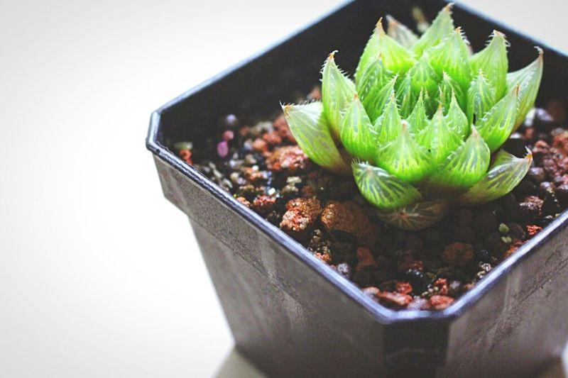 Plants 🌱 Plant