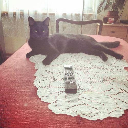 Chill 😻😹🙈🙉 Cat Easylife Catonthetable Lithuaniancat 😂 BLackCat Bučkis Ramus 😧 Pakruojis Neliūdim Tfl Tags Tagsforlikes Black 😈❤