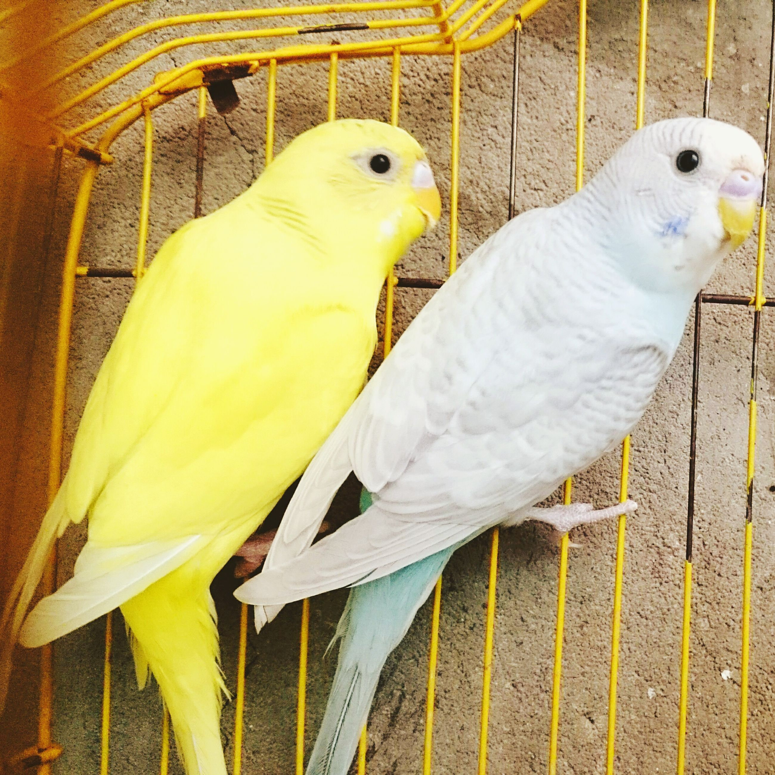 animal themes, bird, one animal, wildlife, animals in the wild, yellow, close-up, beak, white color, full length, side view, perching, vertebrate, zoology, parrot, nature, outdoors, animal head, day, no people