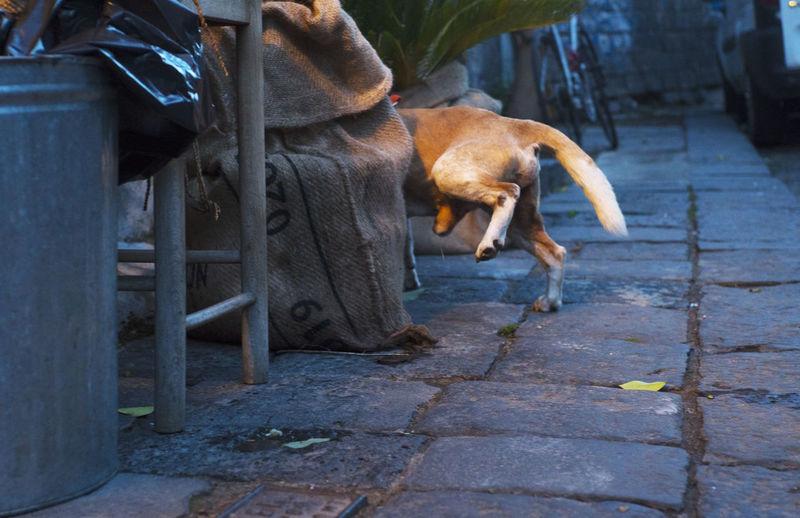 Catania Sicily Animal Dog Sicilyphotography Streetphotography Streetphotography Urbanphotography Urban